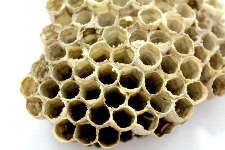 Propolis – kit pszczeli